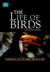 Rent The Life of Birds on DVD